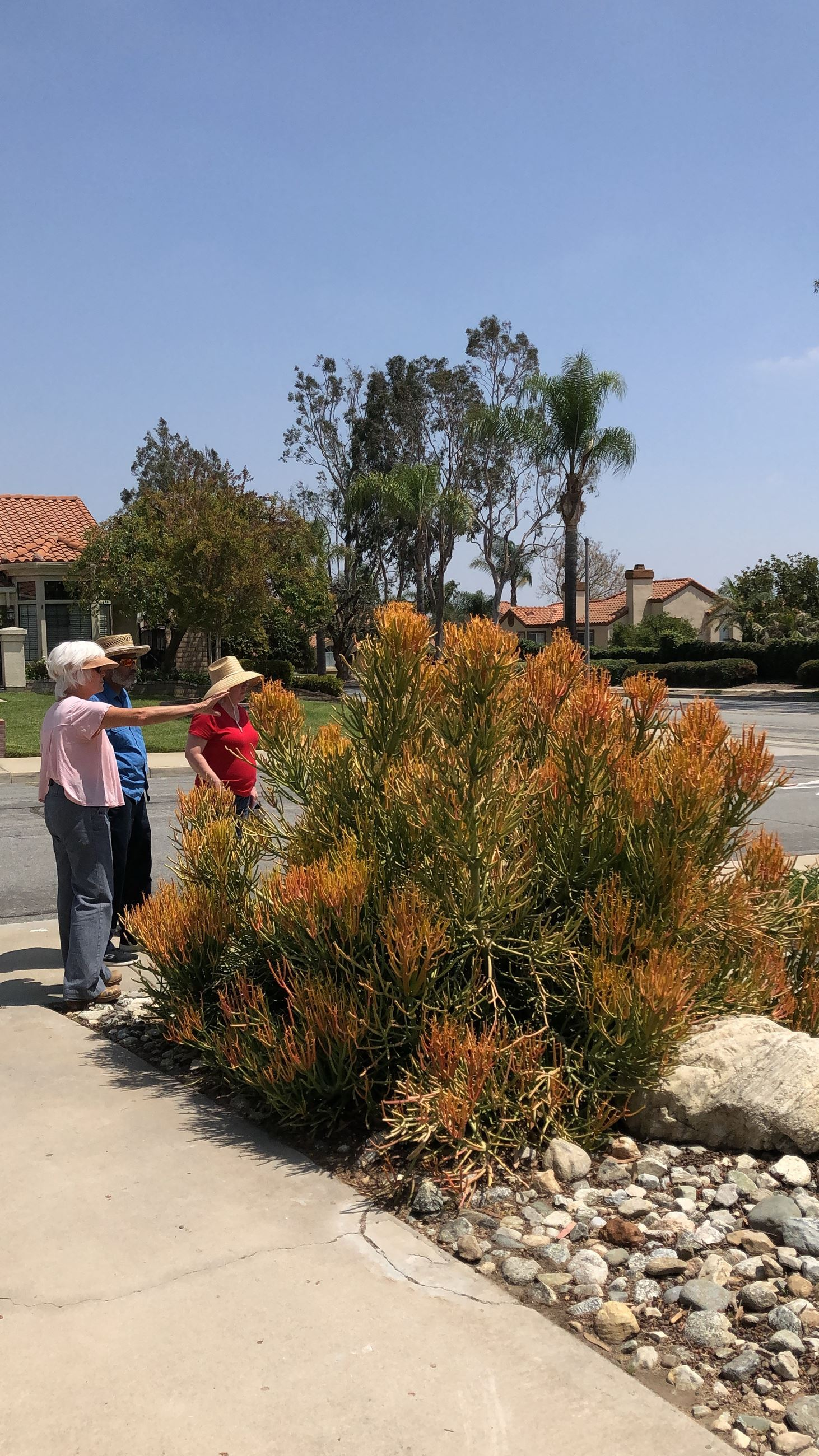 Water Savvy Garden Tour | Cucamonga Valley Water District - Official ...